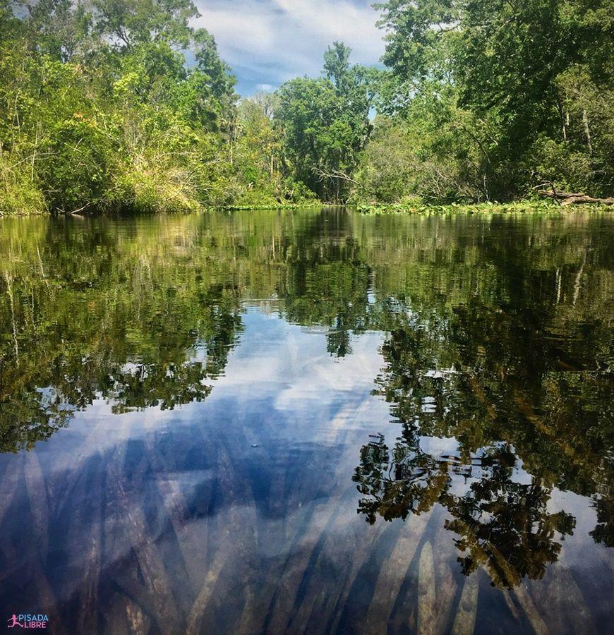 Ocala National Forest naturaleza