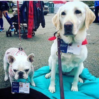 perros de terapia en new york